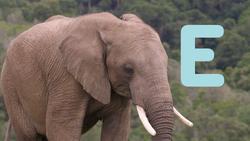 5020-Elephants