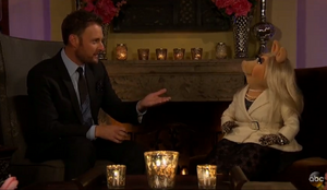 Piggy chris harrison