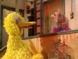 Did Miss Piggy appear on Sesame Street?