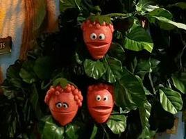 Weatherberries