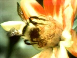 BeeFilm