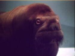 Film-Walrus