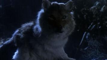 TS-Wolf