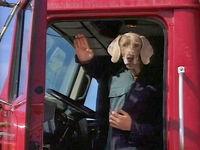 Wegman truck driver