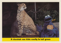 Sesamecard 088
