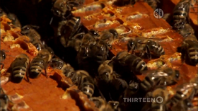 HoneyBeeSong