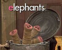 Oscarselephants