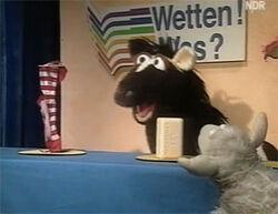 Wettenwas-socks