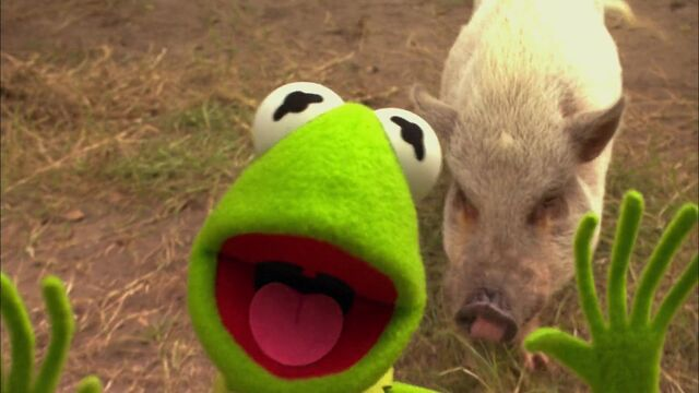 File:KSY-Pig.jpg