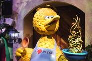 Spaghetti chase bird