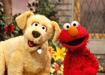Brandeis&Elmo