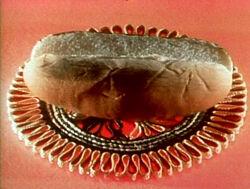 Hotdogbun