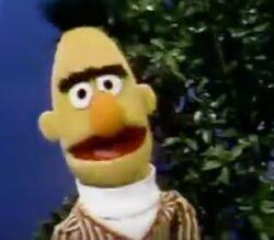 Bert season 8