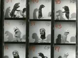 Behind the scenes Henson photos