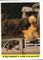 1992 sesame trading cards 99