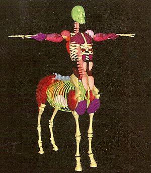 Lionwardrobe-centaur