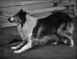 Rowlf lassie2a