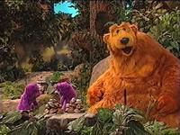 Bear310g