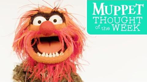 Muppet Thought of the Week feat. Animal The Muppets-0