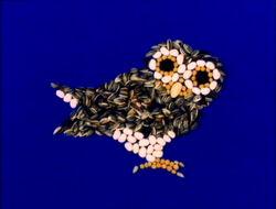 OwlSeeds