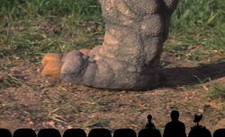 Mst3k mountain big bird