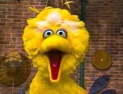 BigBird.eyeswide