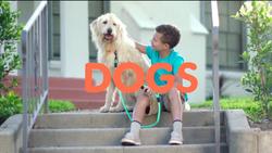 4630-Dog