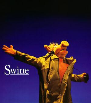 Swine-shine
