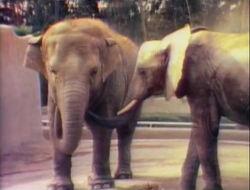 3181-Elephants