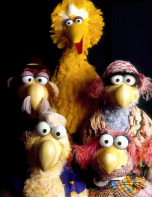 Big Bird and Dodos