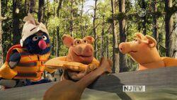 SG-Pigs02