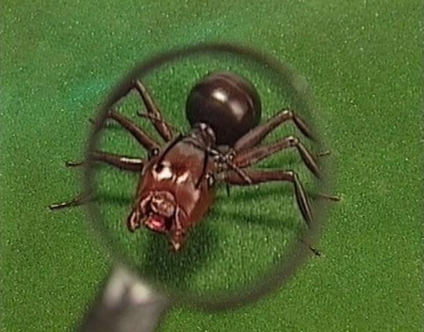 File:Nemets the Ant.jpg