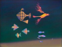 Allfish