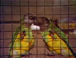 2parrots