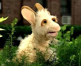 Lassie-Goat