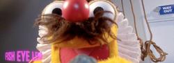 MuppetsO2-FishEye
