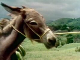 What Can You Do with a Burro