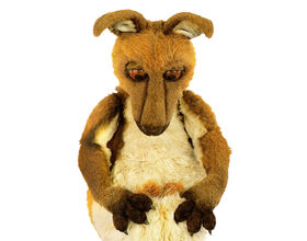Kasey the Kangaroo