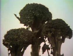 Film-BroccoliCU