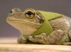 Frog-kermit-collar