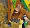 Lawrence the Orangutan 3x22