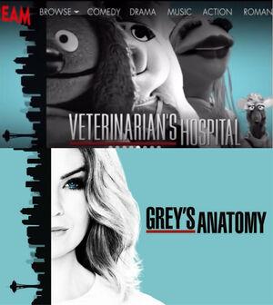 Vets-Greys