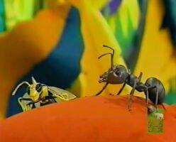 Max the Wasp