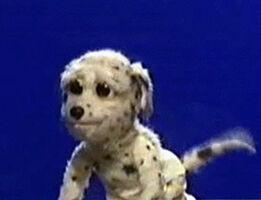 Buffydog