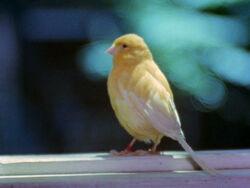 Timepiecebird