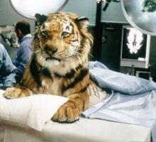 Jake-tiger