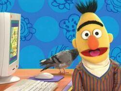 Pigeonpattern Bernice intro