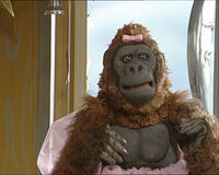 Mary the Gorilla