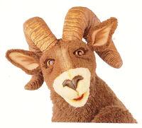 Rocky the Bighorn Sheep