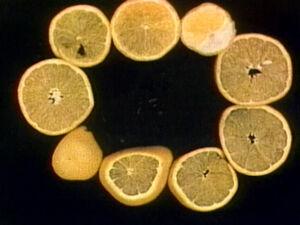 Oranges!!